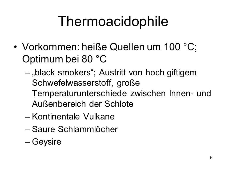 Thermoacidophile Vorkommen: heiße Quellen um 100 °C; Optimum bei 80 °C