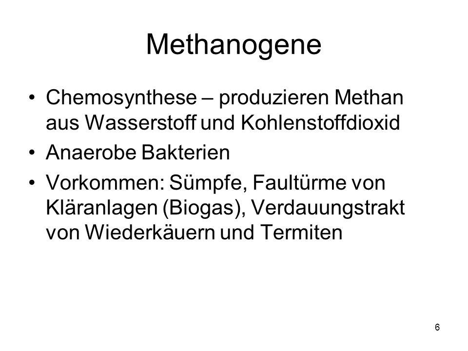 Methanogene Chemosynthese – produzieren Methan aus Wasserstoff und Kohlenstoffdioxid. Anaerobe Bakterien.