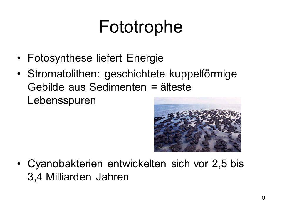 Fototrophe Fotosynthese liefert Energie
