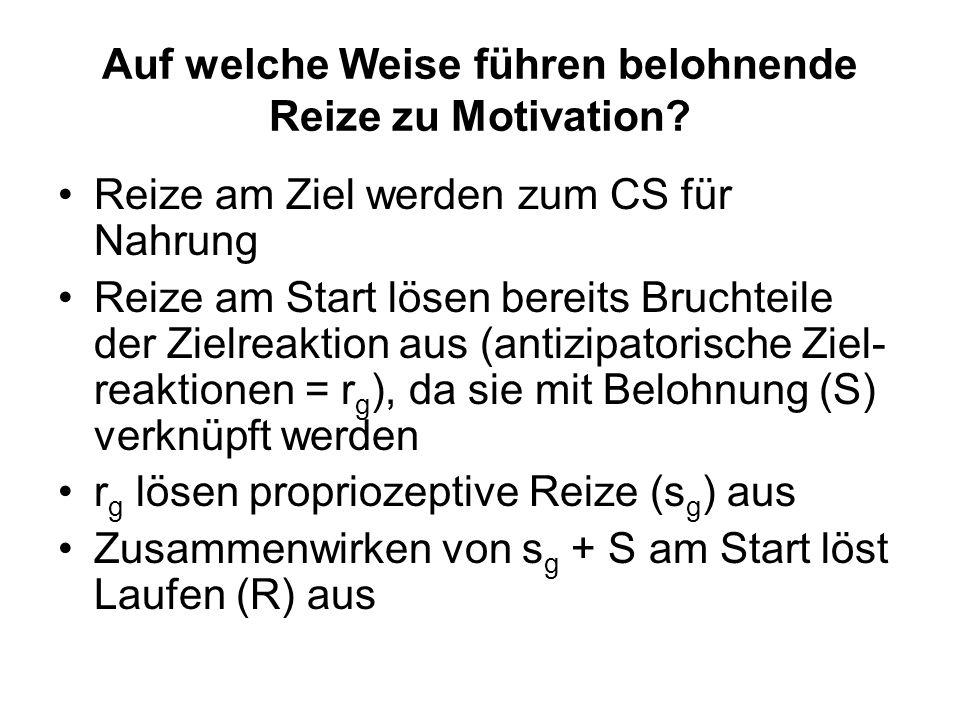 Auf welche Weise führen belohnende Reize zu Motivation