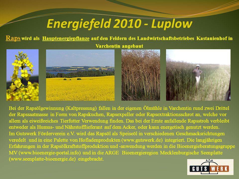Energiefeld 2010 - Luplow Raps wird als Hauptenergiepflanze auf den Feldern des Landwirtschaftsbetriebes Kastanienhof in Varchentin angebaut.