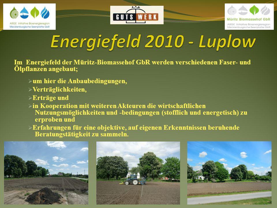 Energiefeld 2010 - Luplow Im Energiefeld der Müritz-Biomassehof GbR werden verschiedenen Faser- und Ölpflanzen angebaut;