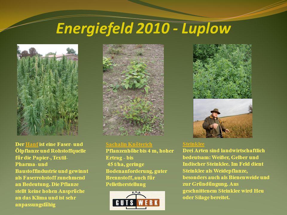Energiefeld 2010 - Luplow