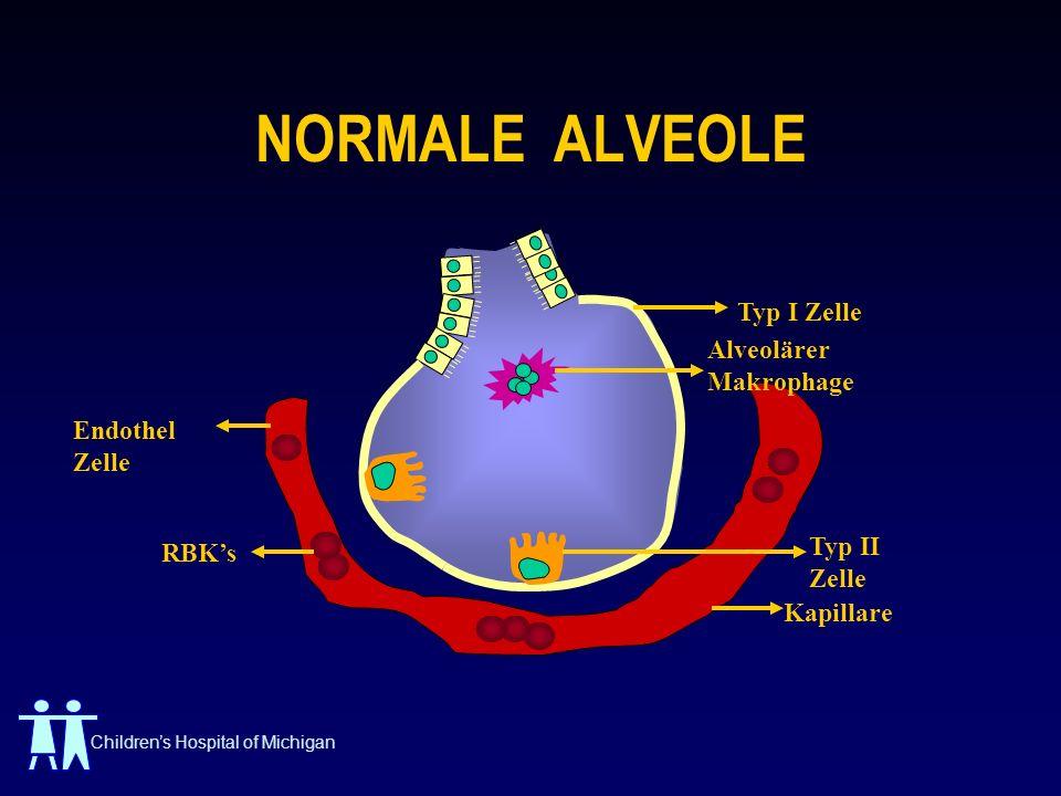 NORMALE ALVEOLE Typ I Zelle Alveolärer Makrophage Endothel Zelle