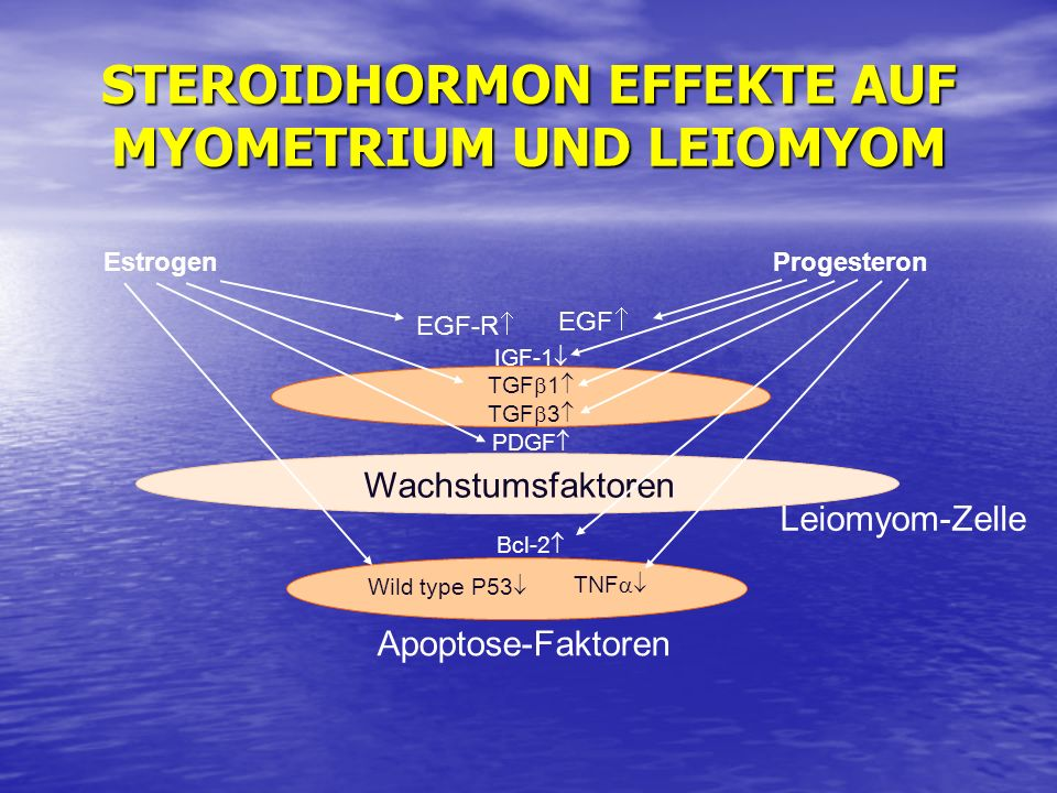 STEROIDHORMON EFFEKTE AUF MYOMETRIUM UND LEIOMYOM