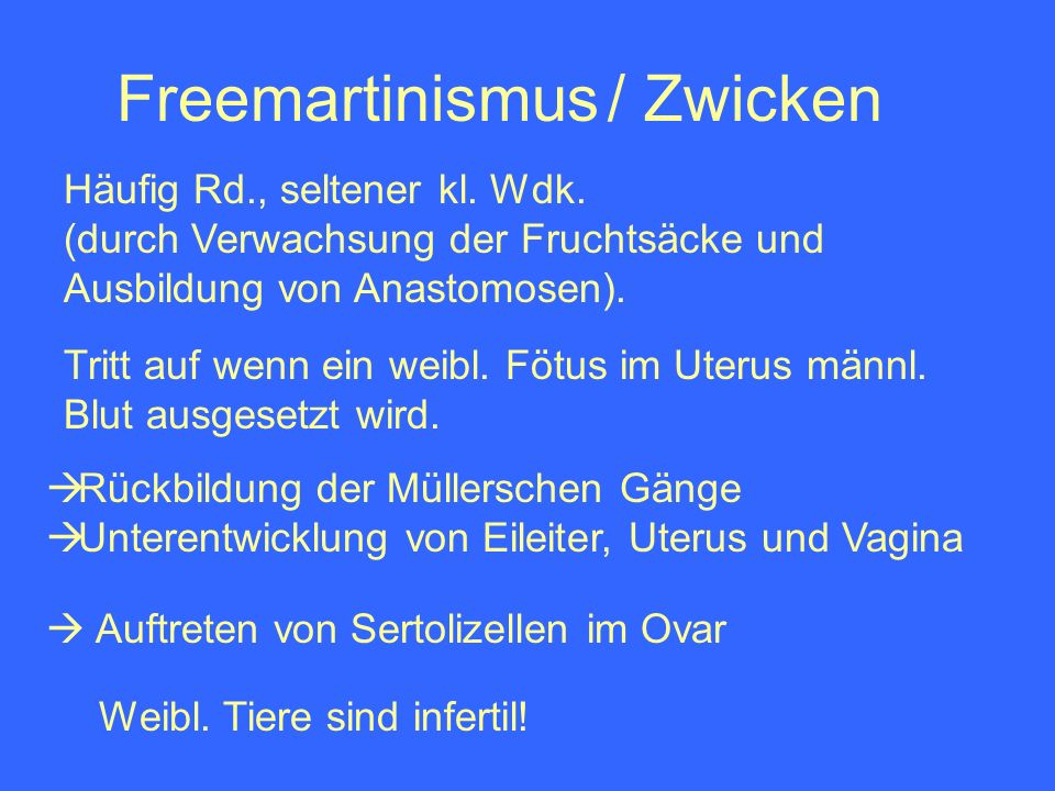 Freemartinismus / Zwicken