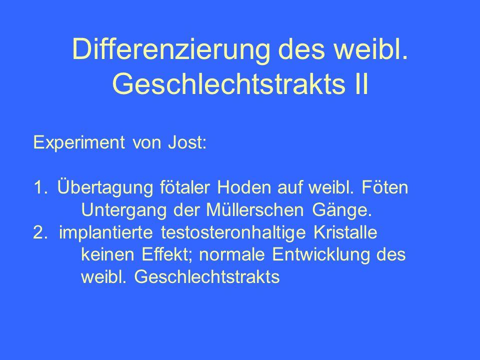 Differenzierung des weibl. Geschlechtstrakts II