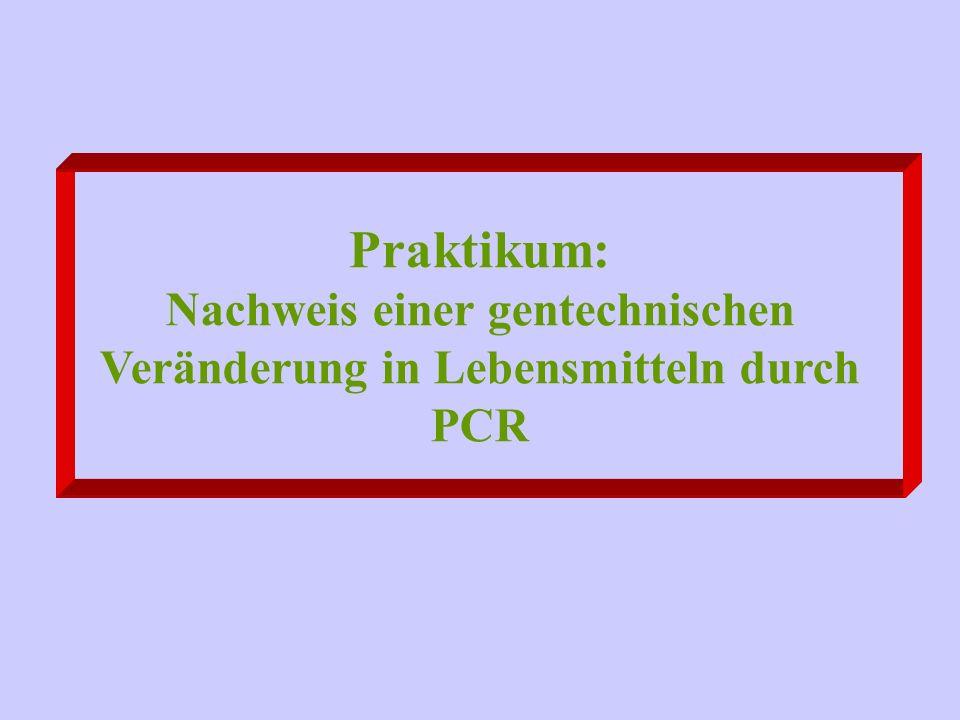 Praktikum: Nachweis einer gentechnischen Veränderung in Lebensmitteln durch PCR