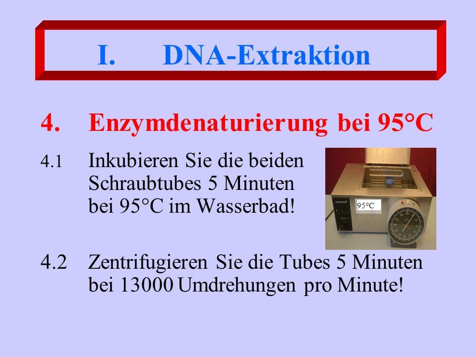 4. Enzymdenaturierung bei 95°C
