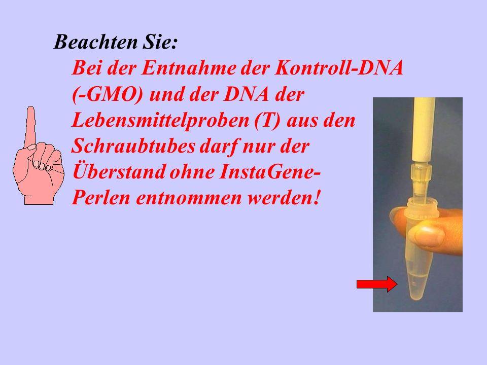 Beachten Sie: Bei der Entnahme der Kontroll-DNA (-GMO) und der DNA der Lebensmittelproben (T) aus den Schraubtubes darf nur der Überstand ohne InstaGene- Perlen entnommen werden!