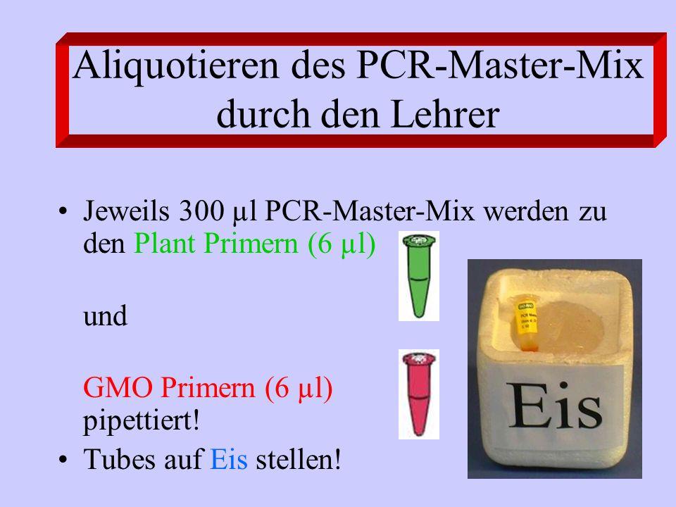 Aliquotieren des PCR-Master-Mix durch den Lehrer