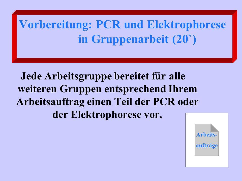 Vorbereitung: PCR und Elektrophorese in Gruppenarbeit (20`)