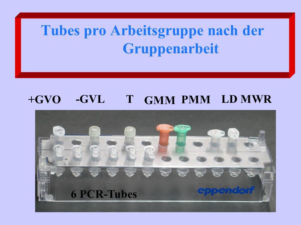 Tubes pro Arbeitsgruppe nach der Gruppenarbeit