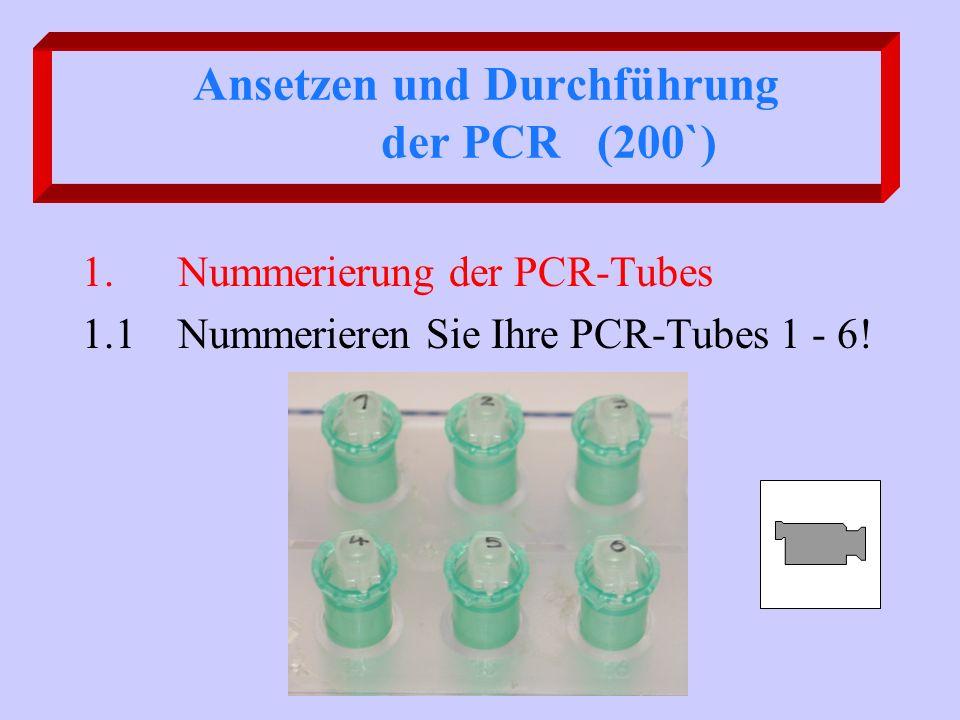 Ansetzen und Durchführung der PCR (200`)