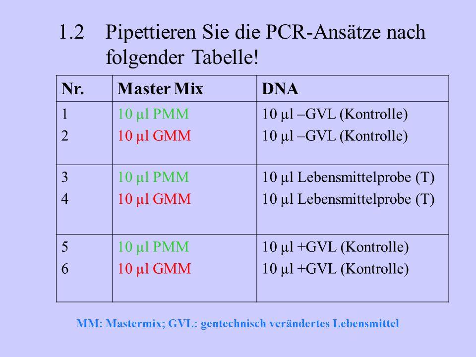 1.2 Pipettieren Sie die PCR-Ansätze nach folgender Tabelle!