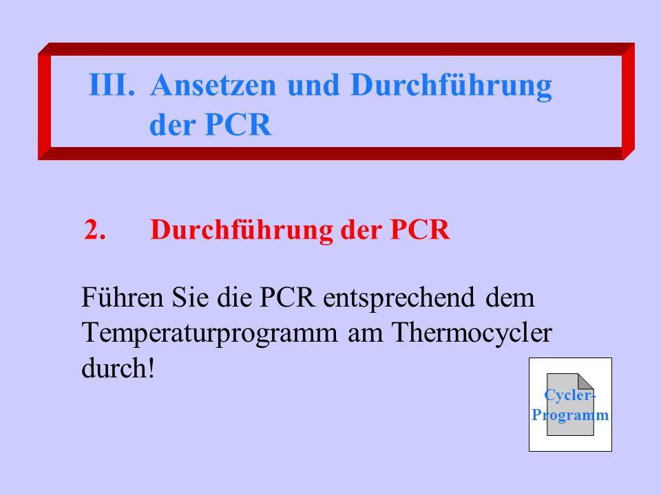 Ansetzen und Durchführung der PCR