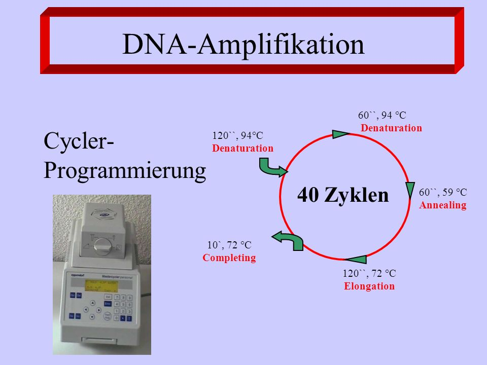 DNA-Amplifikation Cycler-Programmierung 40 Zyklen