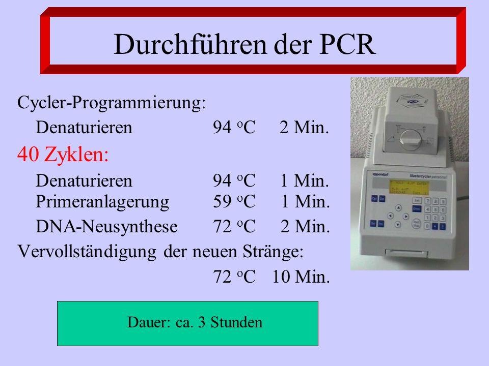 Durchführen der PCR 40 Zyklen: Cycler-Programmierung: