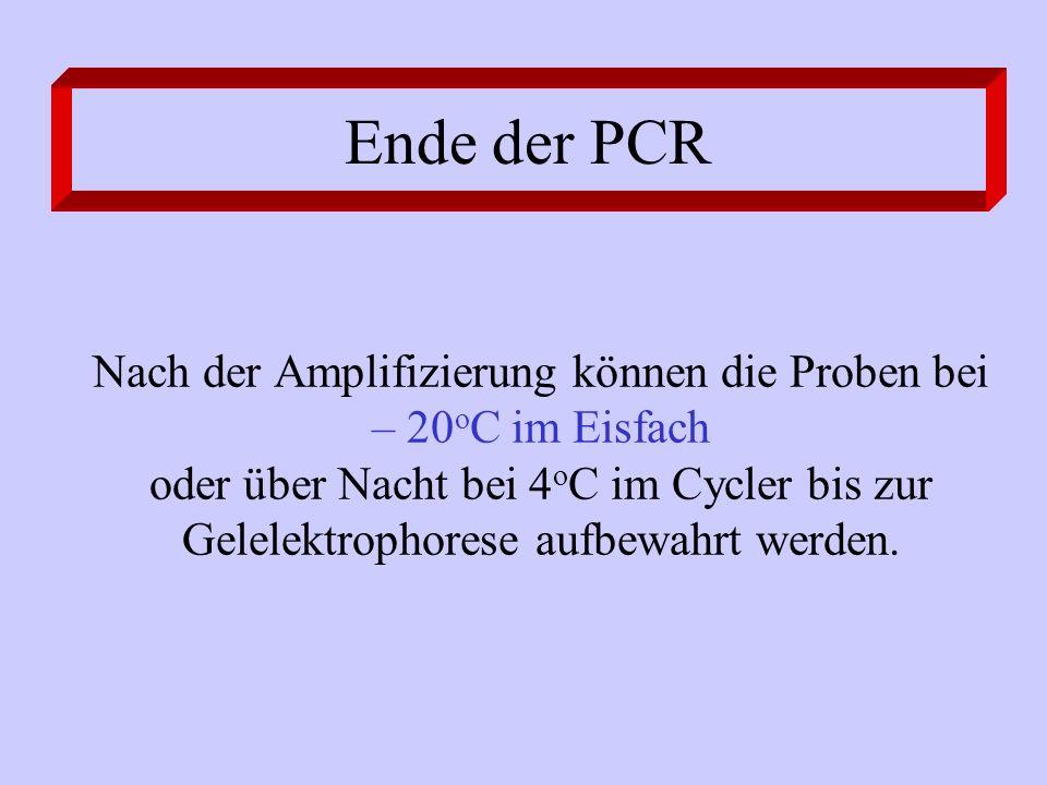Ende der PCR