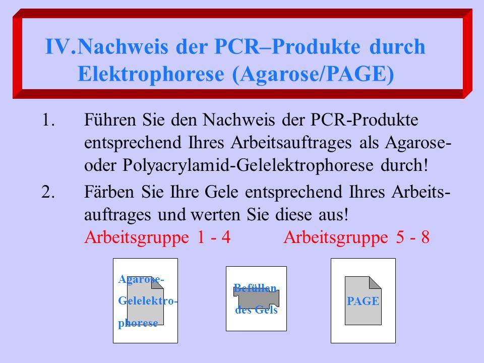 Nachweis der PCR–Produkte durch Elektrophorese (Agarose/PAGE)