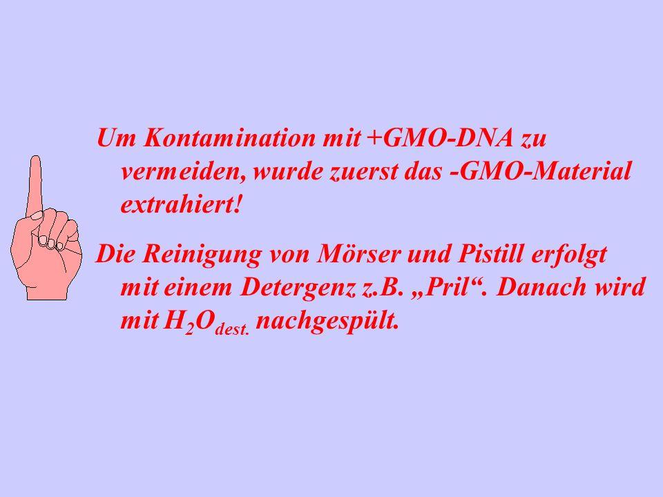 Um Kontamination mit +GMO-DNA zu vermeiden, wurde zuerst das -GMO-Material extrahiert!