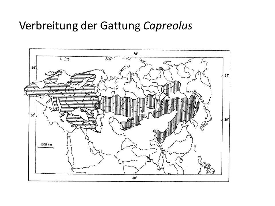 Verbreitung der Gattung Capreolus