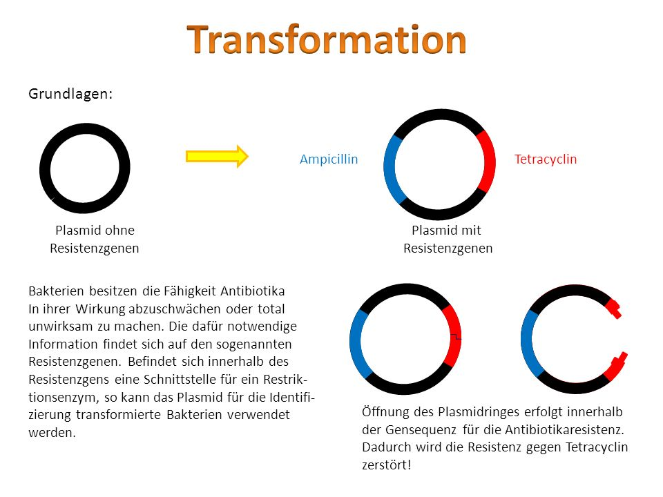 Transformation Grundlagen: Ampicillin Tetracyclin