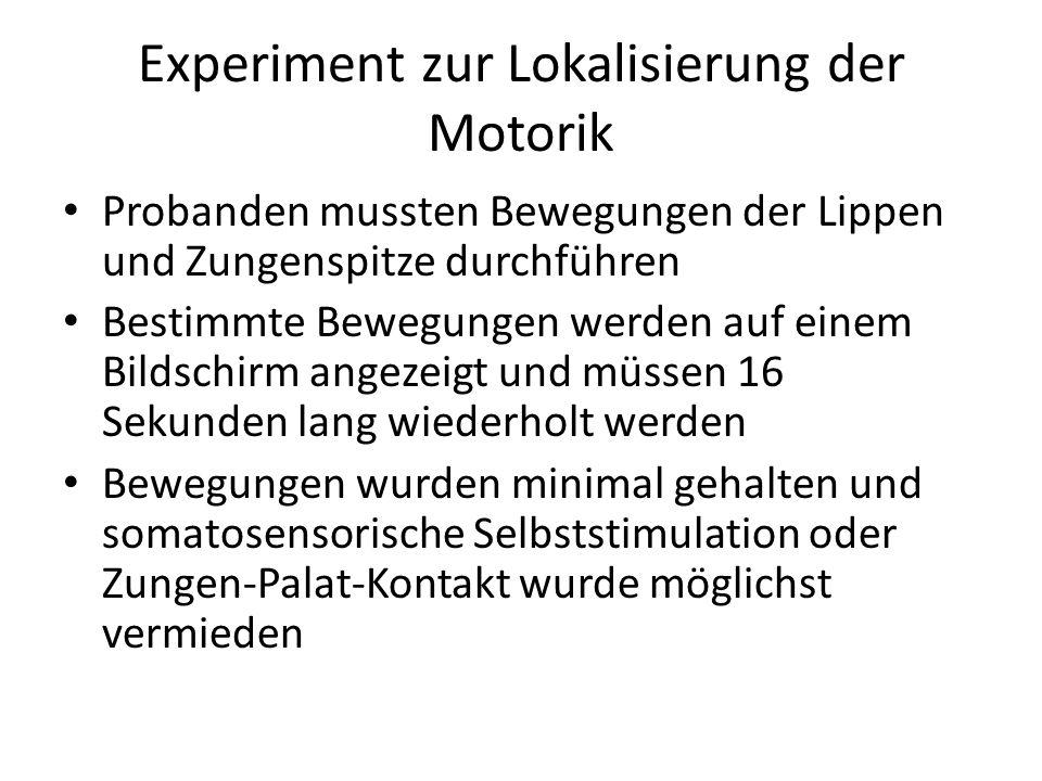 Experiment zur Lokalisierung der Motorik