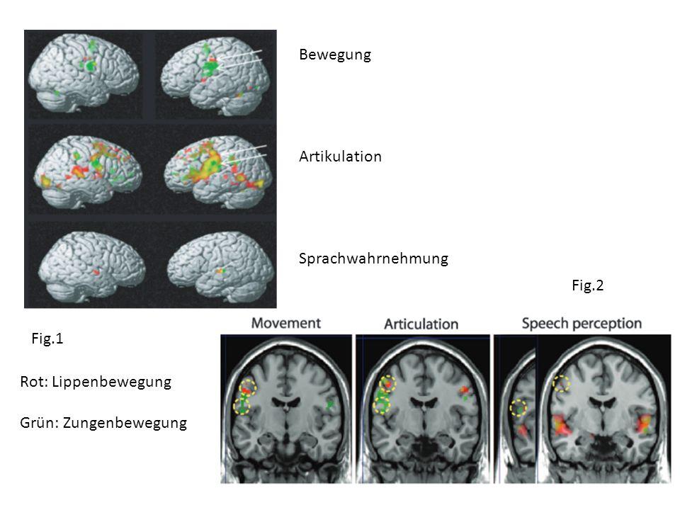 Bewegung Artikulation Sprachwahrnehmung Fig.2 Fig.1 Rot: Lippenbewegung Grün: Zungenbewegung