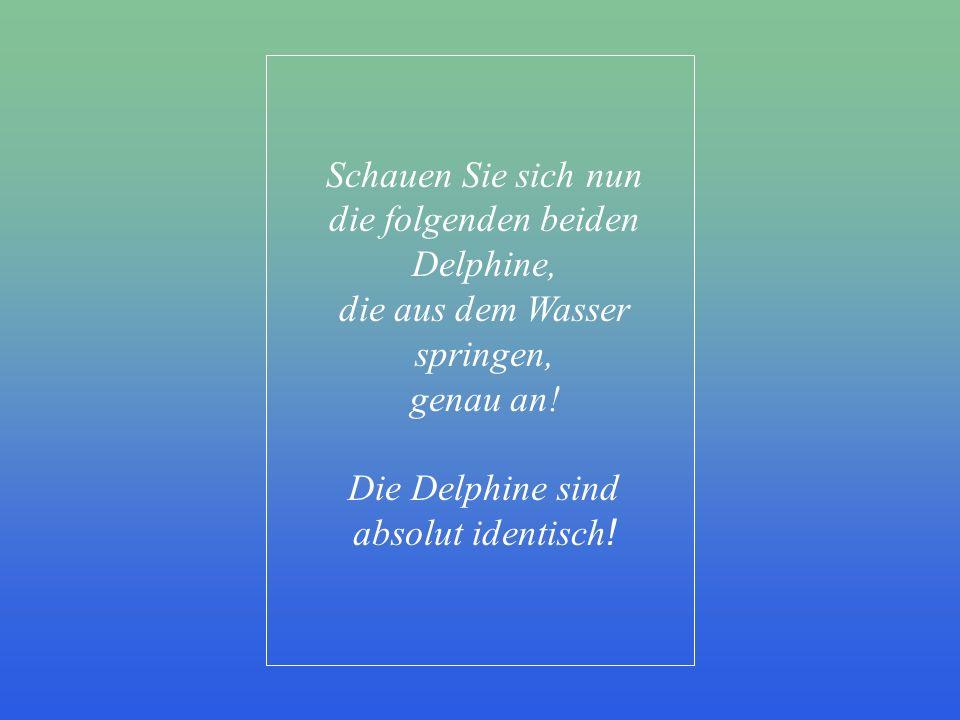 die folgenden beiden Delphine, die aus dem Wasser springen, genau an!