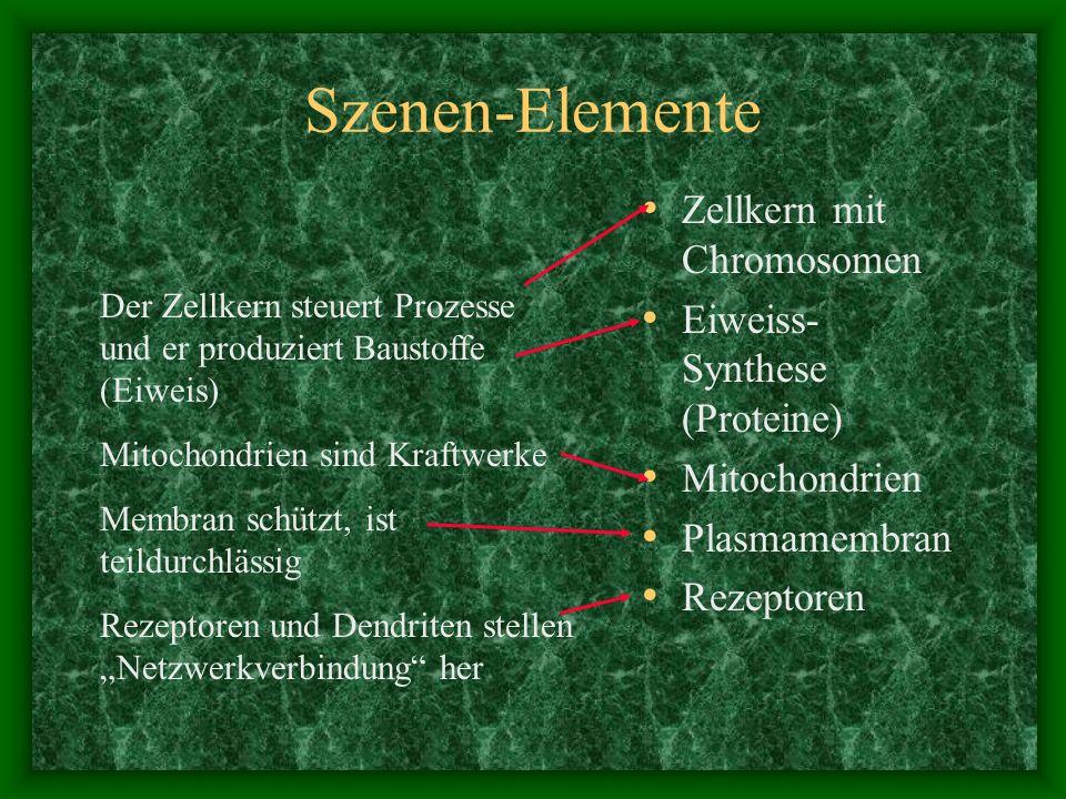 Szenen-Elemente Zellkern mit Chromosomen Eiweiss-Synthese (Proteine)
