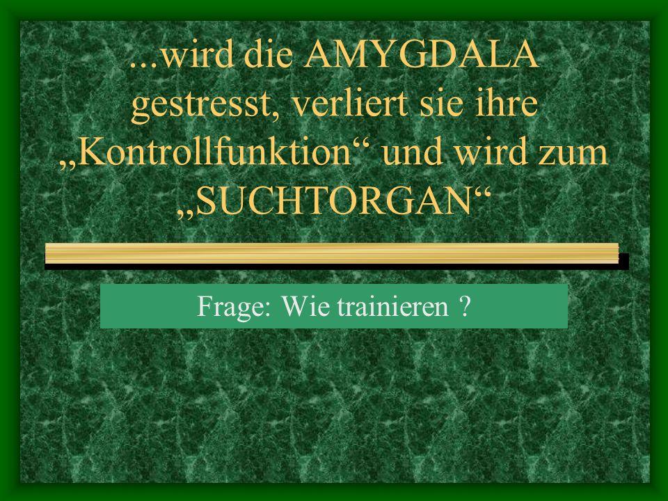"""...wird die AMYGDALA gestresst, verliert sie ihre """"Kontrollfunktion und wird zum """"SUCHTORGAN"""