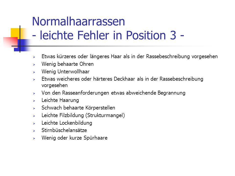Normalhaarrassen - leichte Fehler in Position 3 -