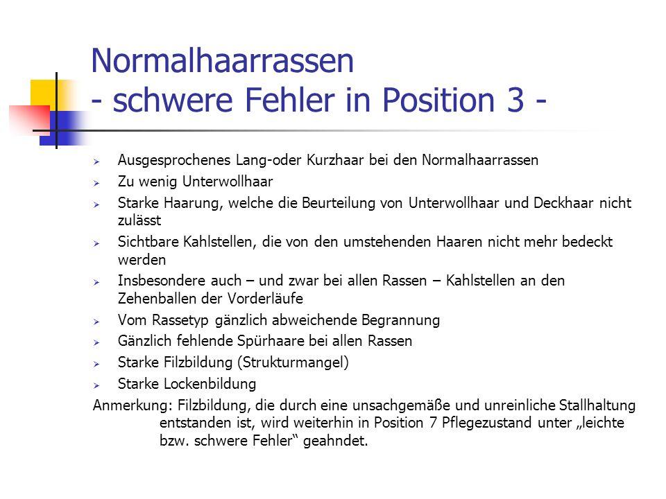 Normalhaarrassen - schwere Fehler in Position 3 -