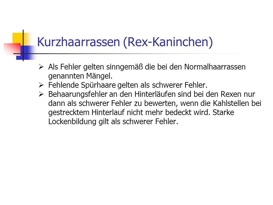 Kurzhaarrassen (Rex-Kaninchen)
