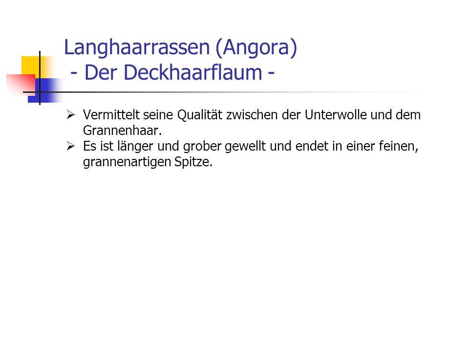 Langhaarrassen (Angora) - Der Deckhaarflaum -