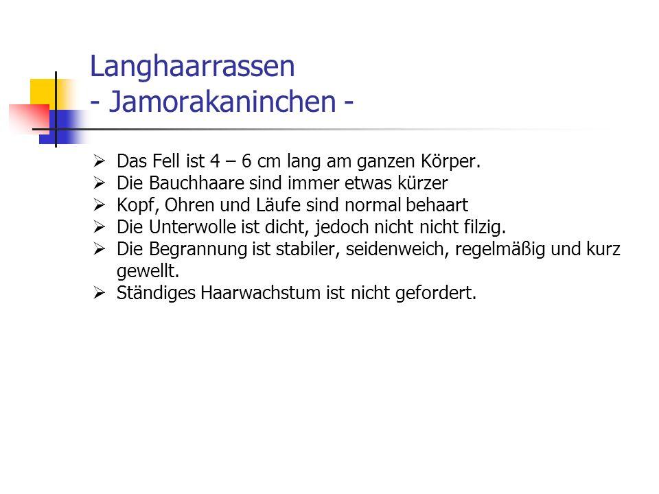 Langhaarrassen - Jamorakaninchen -
