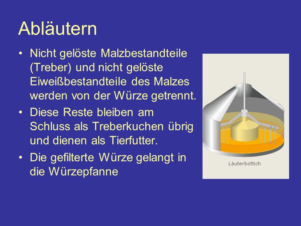 Abläutern Nicht gelöste Malzbestandteile (Treber) und nicht gelöste Eiweißbestandteile des Malzes werden von der Würze getrennt.