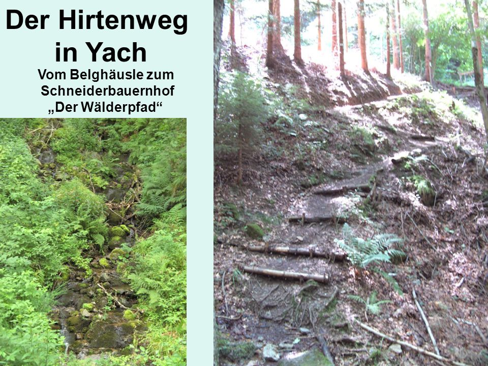Der Hirtenweg in Yach Vom Belghäusle zum Schneiderbauernhof