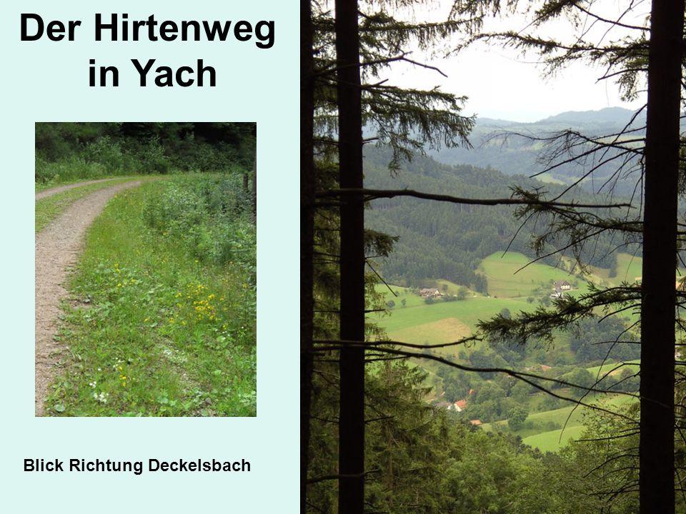 Blick Richtung Deckelsbach