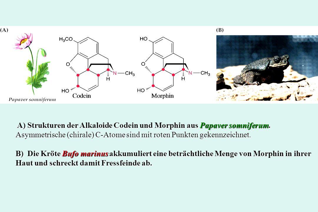 A) Strukturen der Alkaloide Codein und Morphin aus Papaver somniferum