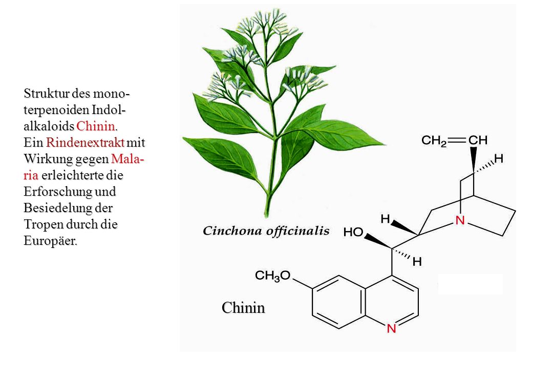 Chinin Struktur des mono- terpenoiden Indol- alkaloids Chinin.