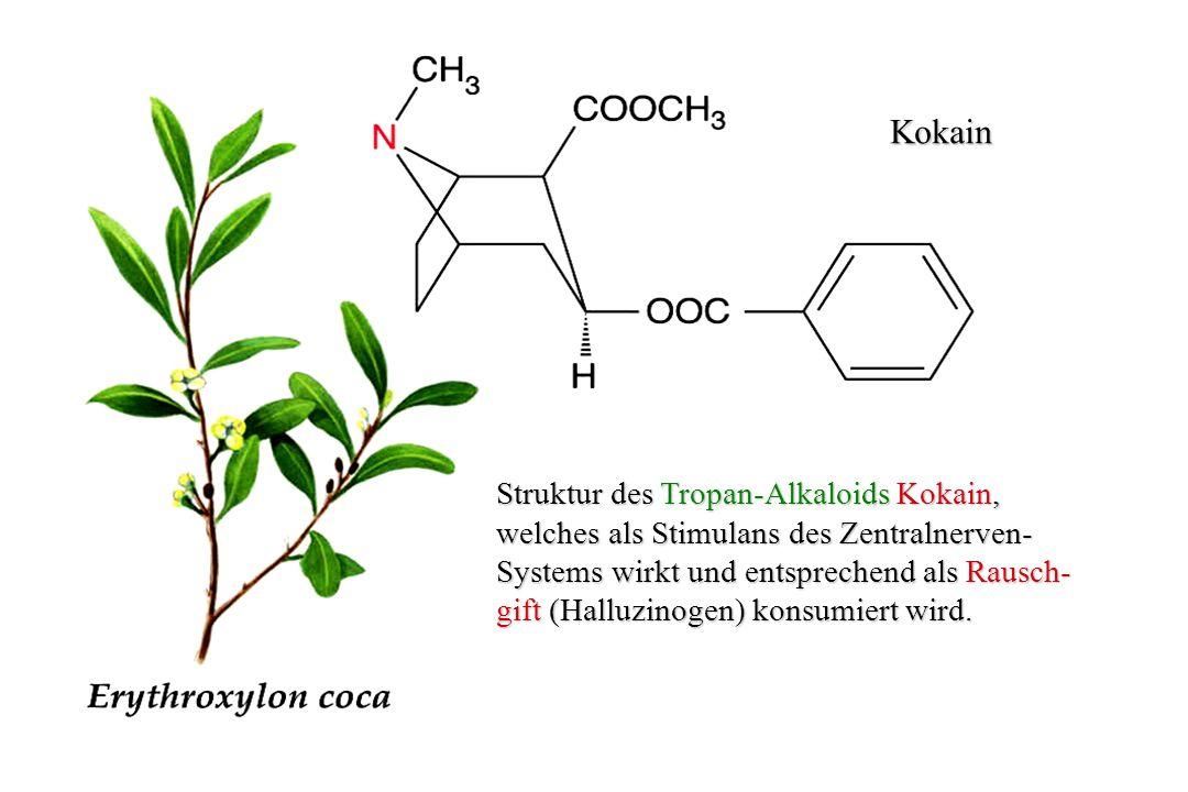 Kokain Struktur des Tropan-Alkaloids Kokain,