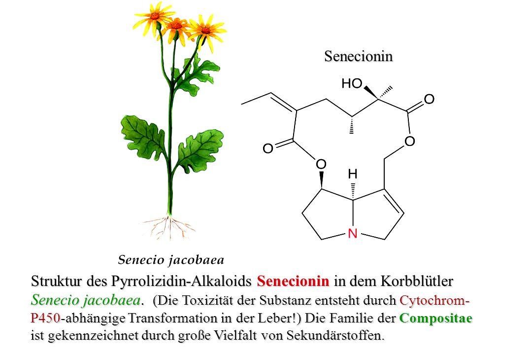 Struktur des Pyrrolizidin-Alkaloids Senecionin in dem Korbblütler