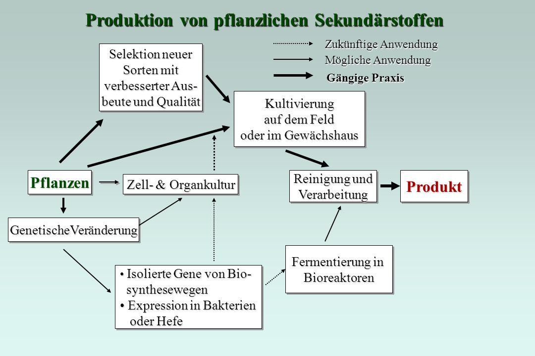 Produktion von pflanzlichen Sekundärstoffen