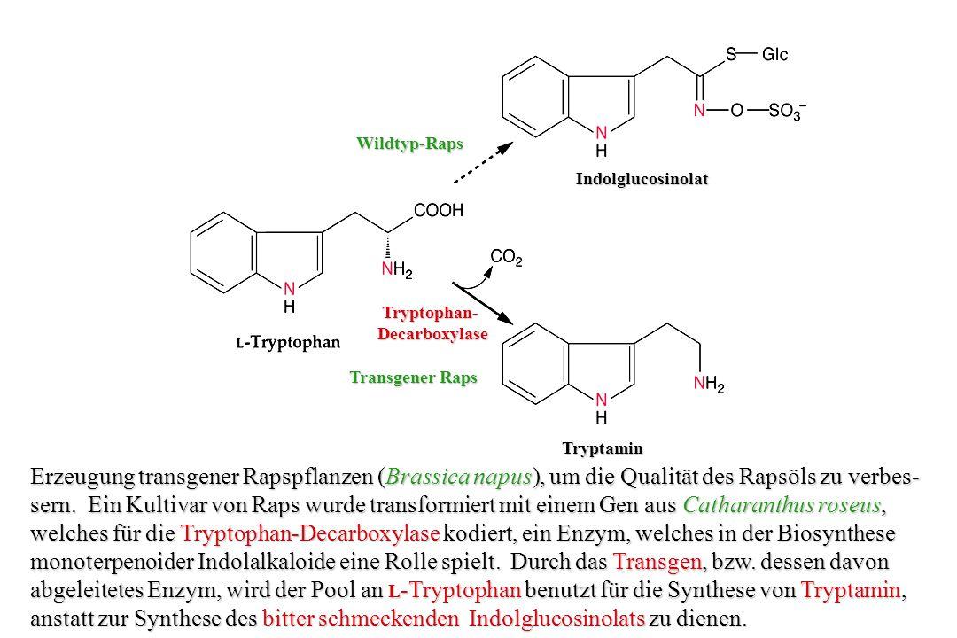 Wildtyp-Raps Indolglucosinolat. Tryptophan- Decarboxylase. Transgener Raps. Tryptamin.