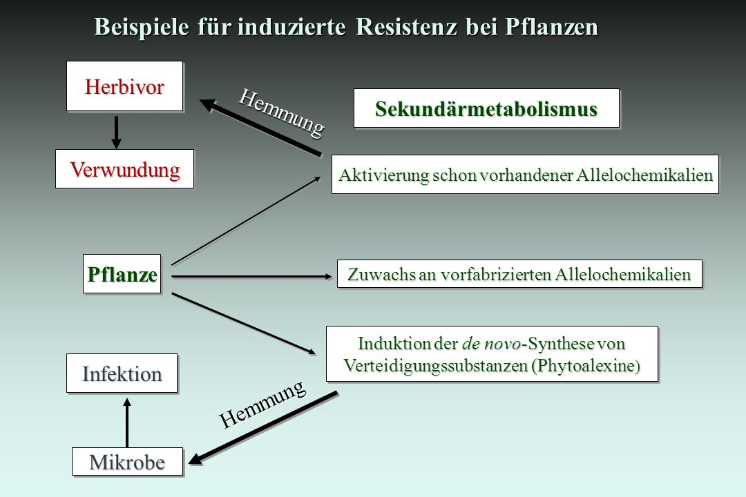 Sekundärmetabolismus