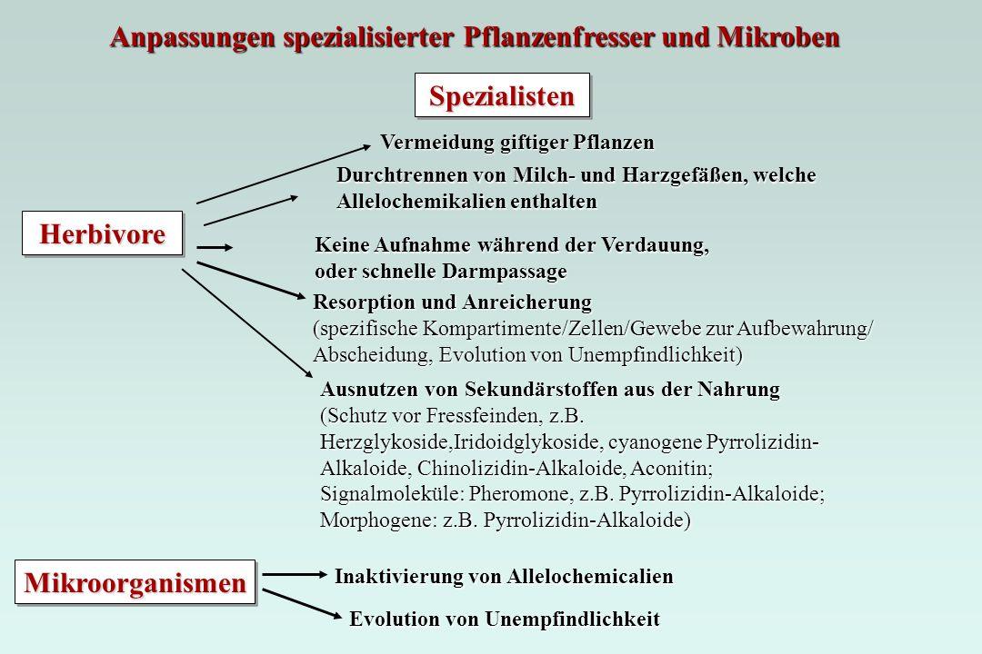 Spezialisten Herbivore Mikroorganismen