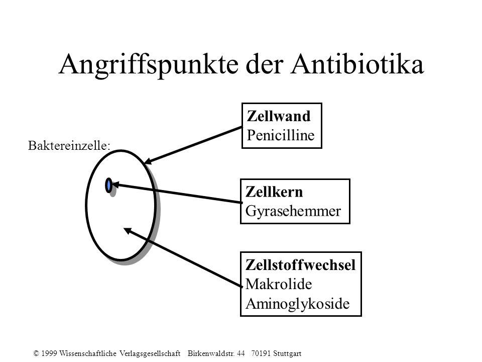 Angriffspunkte der Antibiotika