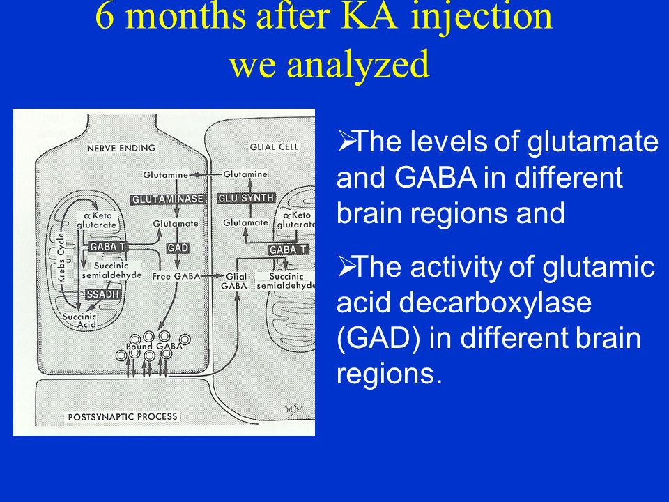 6 months after KA injection we analyzed